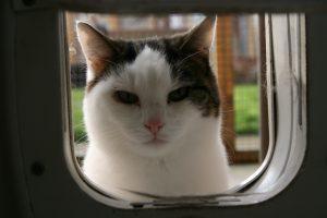 Mavis peeping