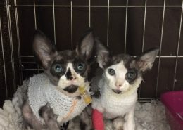 Dobbie & Daisy